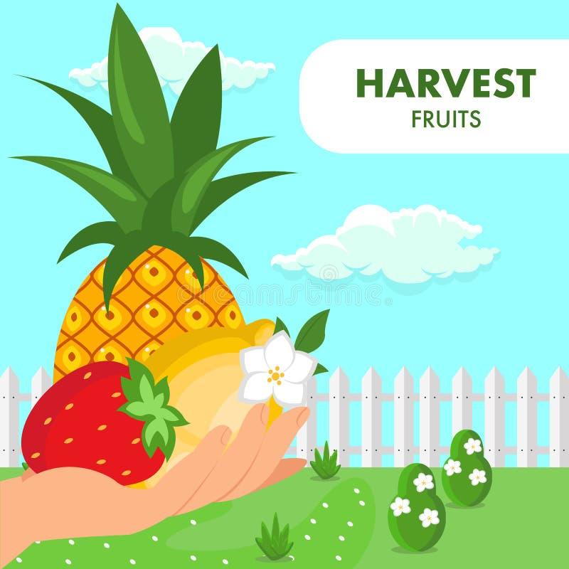 Calibre plat de vecteur d'affiche de récolte d'été de fruits illustration stock