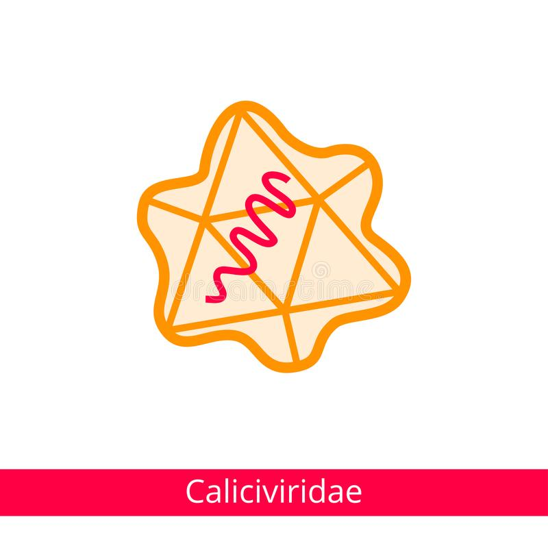 Caliciviridae Ταξινόμηση των ιών ελεύθερη απεικόνιση δικαιώματος