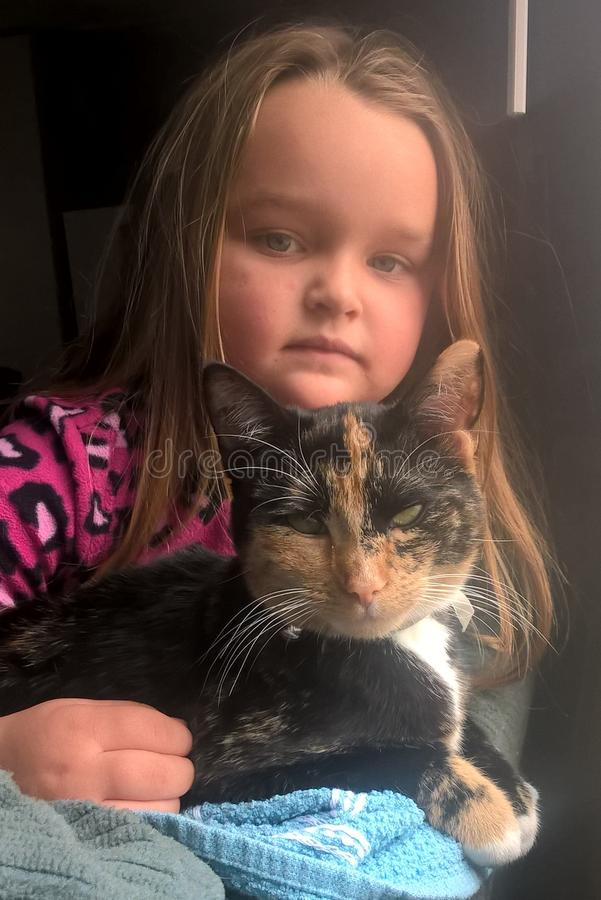Calico Cat and Little Girl. Callie is a six month old American Short Hair, a domestic breed brought to North America by early settlers to protect valuable cargo royalty free stock photography