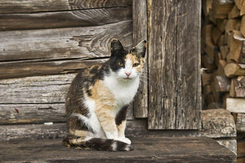 Calico Cat Sitting op Houten Portiek royalty-vrije stock foto