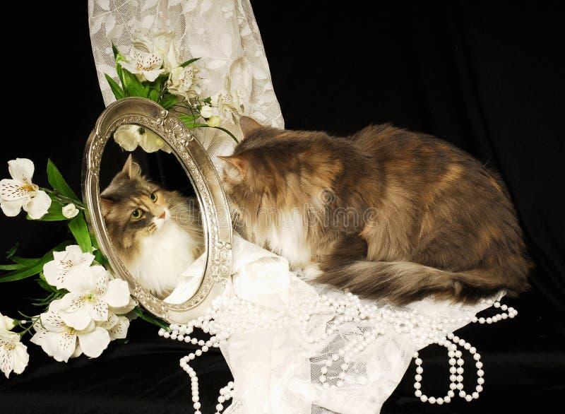 Calico in de Spiegel royalty-vrije stock afbeeldingen