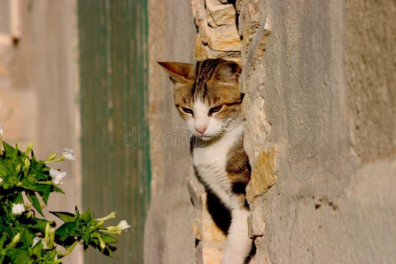 Download Calico in stone stock image. Image of hunter, feline, domestic - 195131