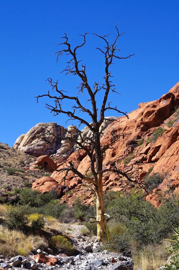Calicotanks, het Rode Gebied van het Rotsbehoud, Zuidelijk Nevada, de V.S. royalty-vrije stock foto's