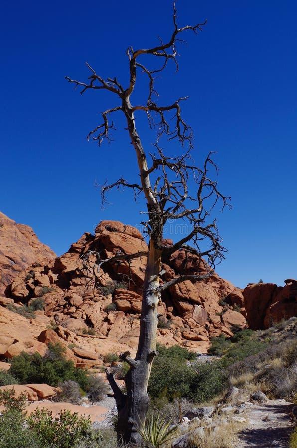Calicotanks, het Rode Gebied van het Rotsbehoud, Zuidelijk Nevada, de V.S. royalty-vrije stock fotografie
