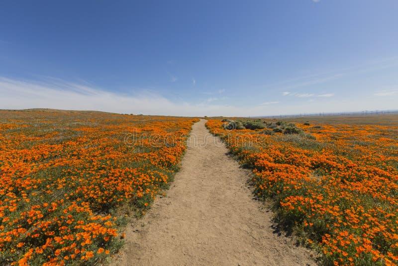 Califórnia Poppy Trail Path imagens de stock royalty free