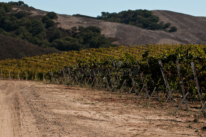 califonria路葡萄园 图库摄影