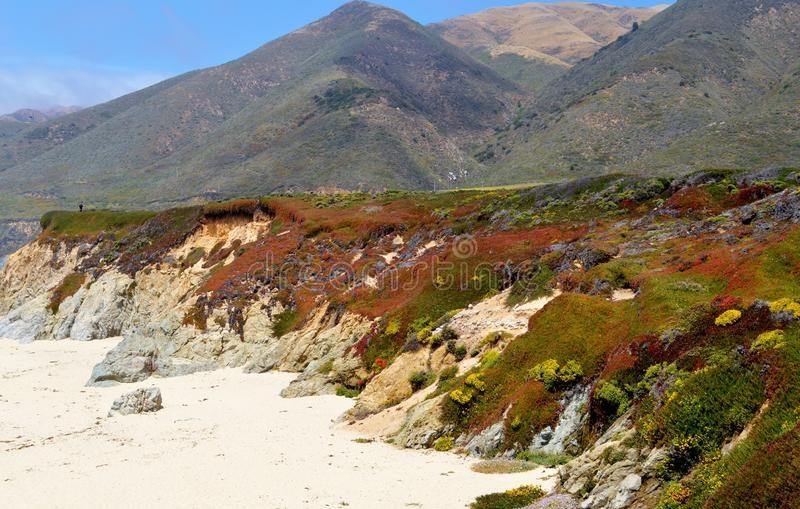 California Beach. Beautiful California beach with sand dunes covered in flowers royalty free stock photos