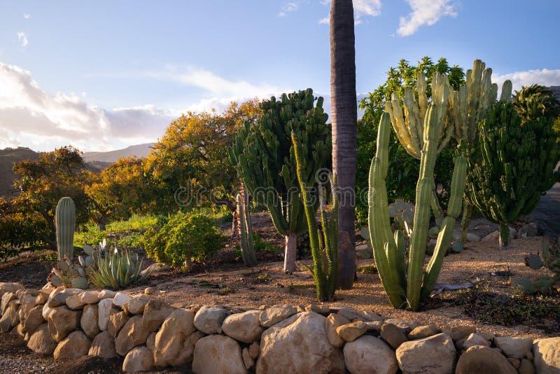 California Cactus Garden Stock Image Image Of Agave 172529987
