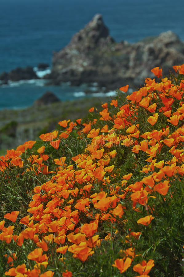 Free California Coast In Spring With Golden Poppies Blooming Near Big Sur California  Royalty Free Stock Photography - 29590237