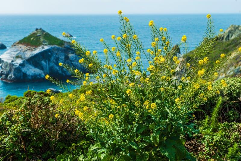 California Coastal floral foto de archivo