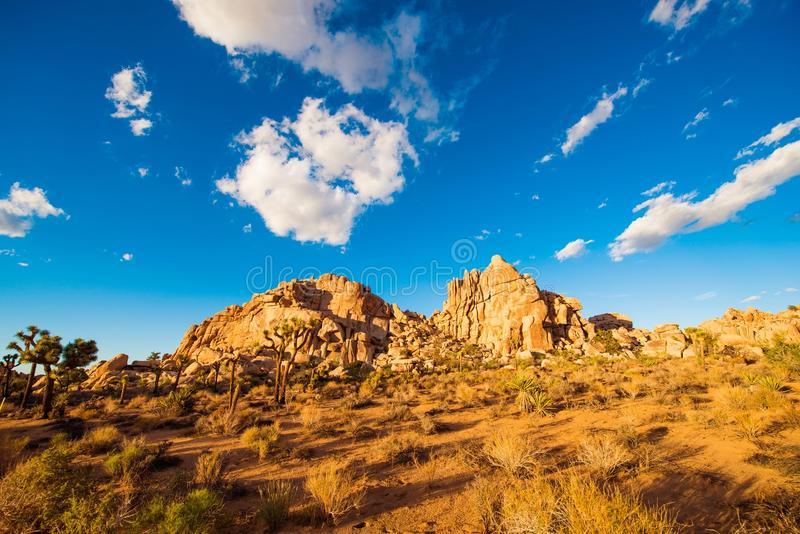 California Desert Landscape. Joshua Trees and Rocks royalty free stock photo