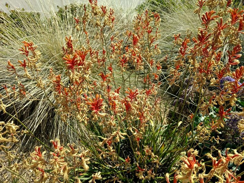 California Dry Flora stock photography