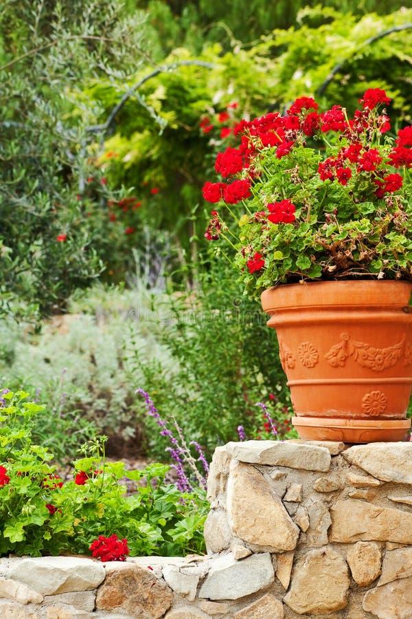 California garden perennials royalty free stock photo