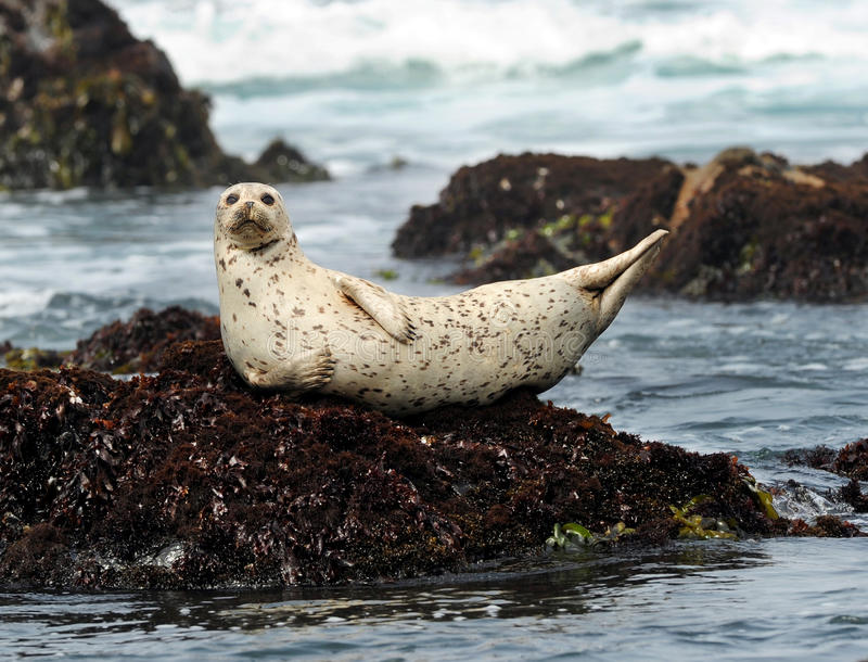 Image result for seal on rock
