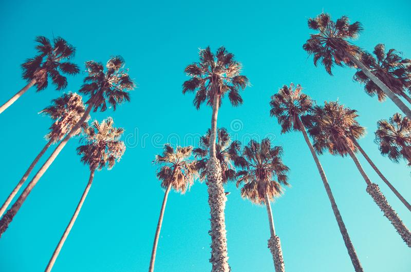 California high palms on the beach, blue sky background. California high palm trees on the beach, blue sky background, vintage toned and stylized, retro style stock photos