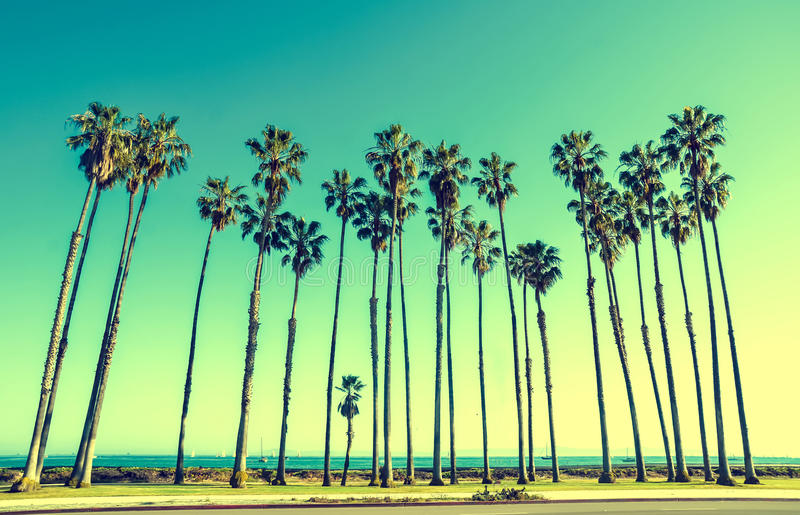 California high palms on the beach, blue sky background. California high palm trees on the beach near the ocean, blue sky background, vintage toned and stylized stock images