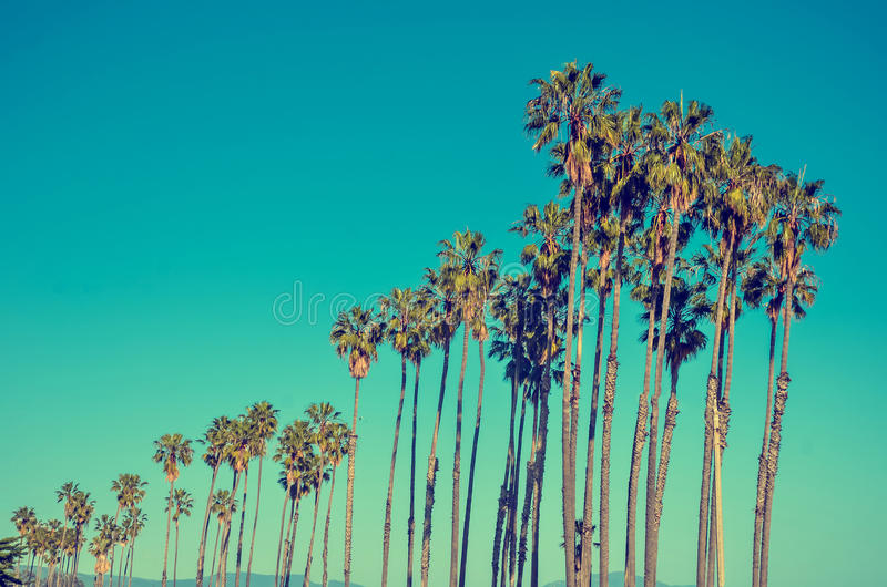 California high palms on the beach, blue sky background. California high palm trees on the beach near the ocean, blue sky background, vintage toned and stylized royalty free stock photography