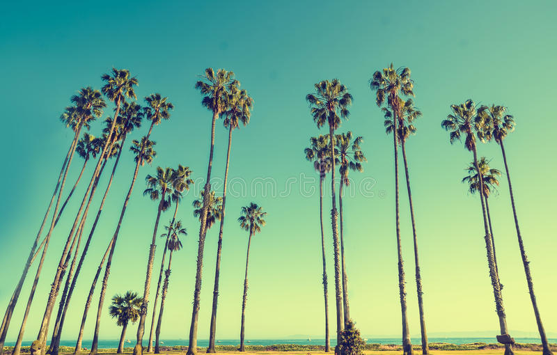 California hight palms on the blue sky background royalty free stock images