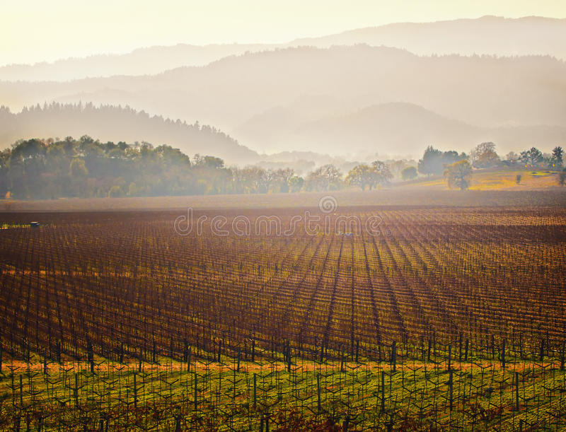 california kraju napa dolinny winnicy wino obrazy stock