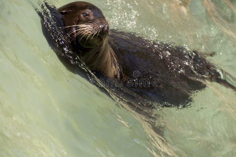 california lwa morza fala fotografia stock