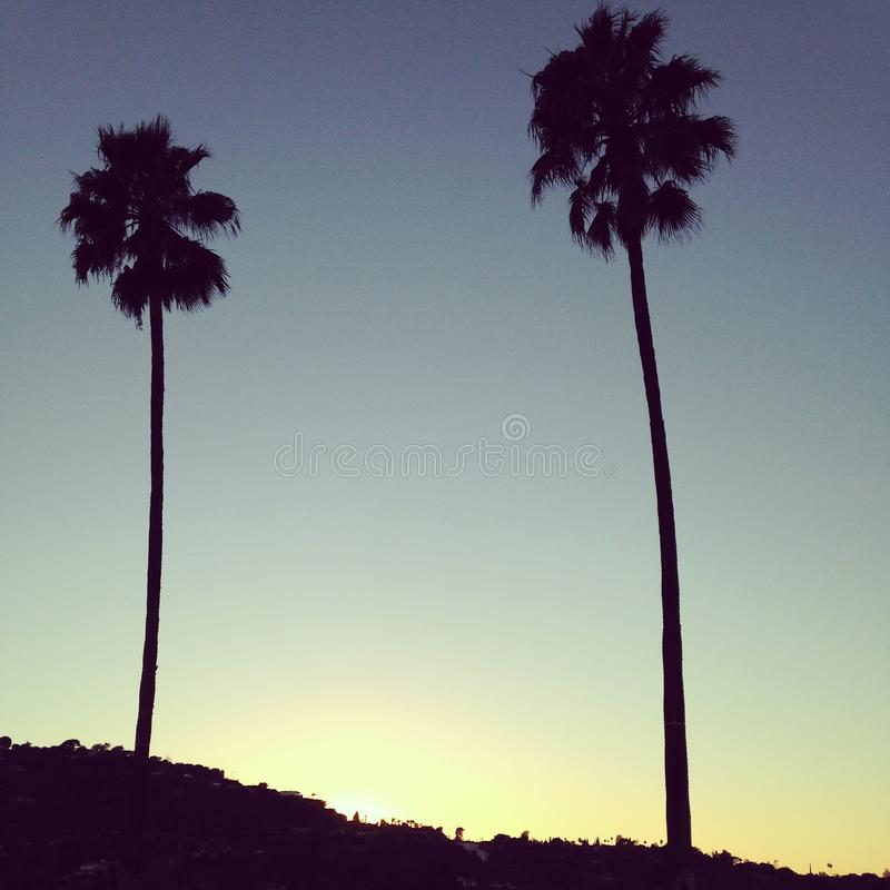 California Nights. The sun sets over two palm trees in Southern California stock photo