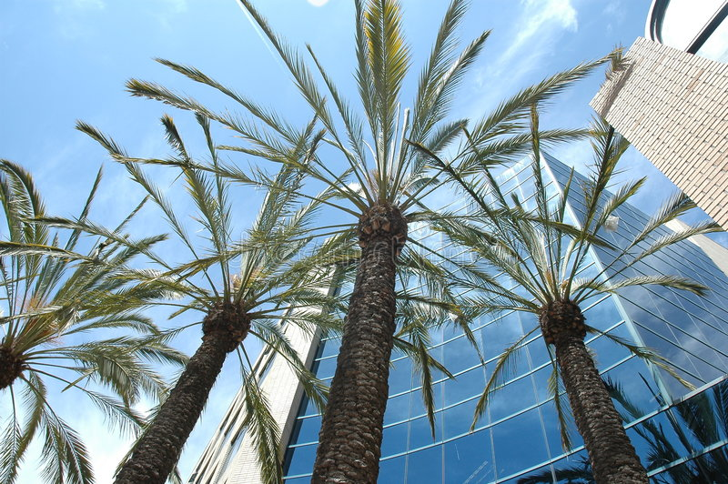 California office building. Palm trees with the sky and office building in the background stock photography