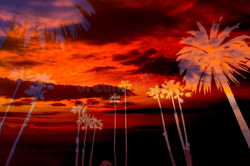 Download California Palm Trees Sunset Sky Silohuette Photo Mount Stock Image - Image: 33856075