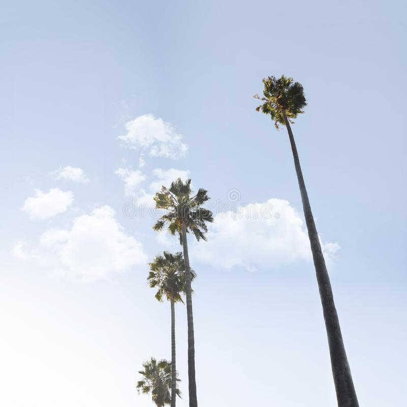 California palms on the blue sky. Beautiful summer vibes in Los Angeles stock images