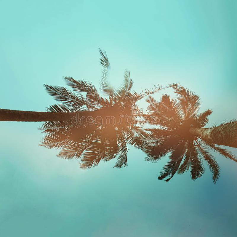 California palms on the blue sky. Beautiful summer vibes in Los Angeles royalty free stock images