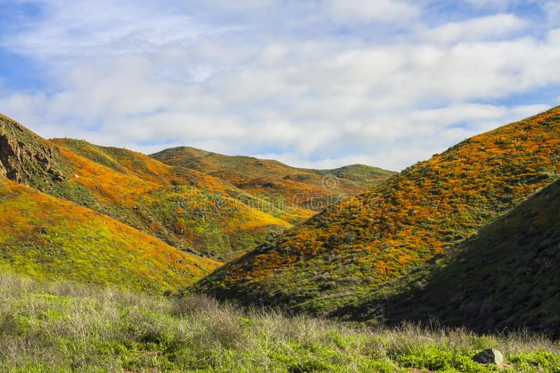 California Poppies on hills, California Super Bloom 2019 stock images