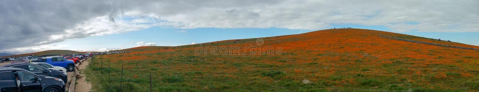 California Poppy field in the desert on cloudy day with sunbeams coming through clouds Eschscholzia californica and a sloping up stock photo