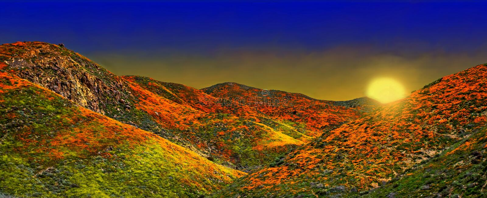 California Poppy fields landscape, sun creasting on the horizen casting a gloden glow over colorful hills and valleys. royalty free stock photography
