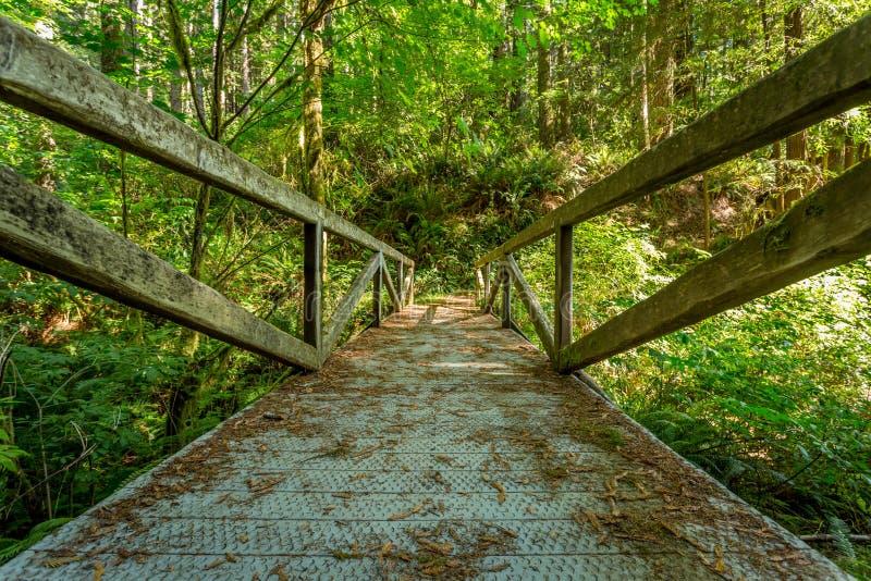 California Redwood Forest bridge stock image