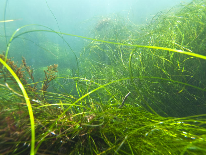 Download California Seagrass stock image. Image of seascape, reef - 15188669