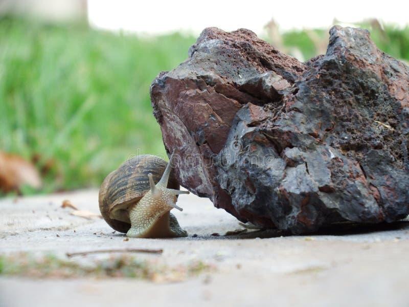 California Slug stock photos