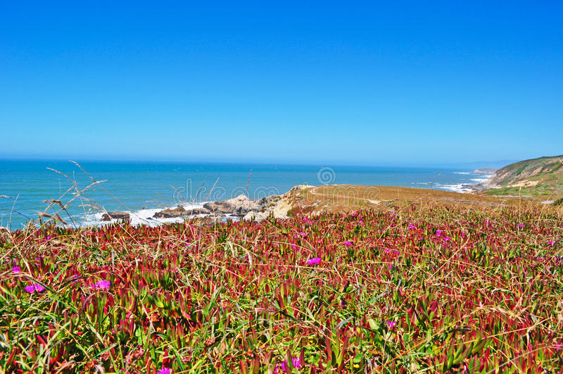 Bodega Bay, Pacific Ocean, rock, cliff, green, California, United States of America, Usa, flowers, beach. Panoramic view of Pacific Ocean in Bodega Bay on June stock photos