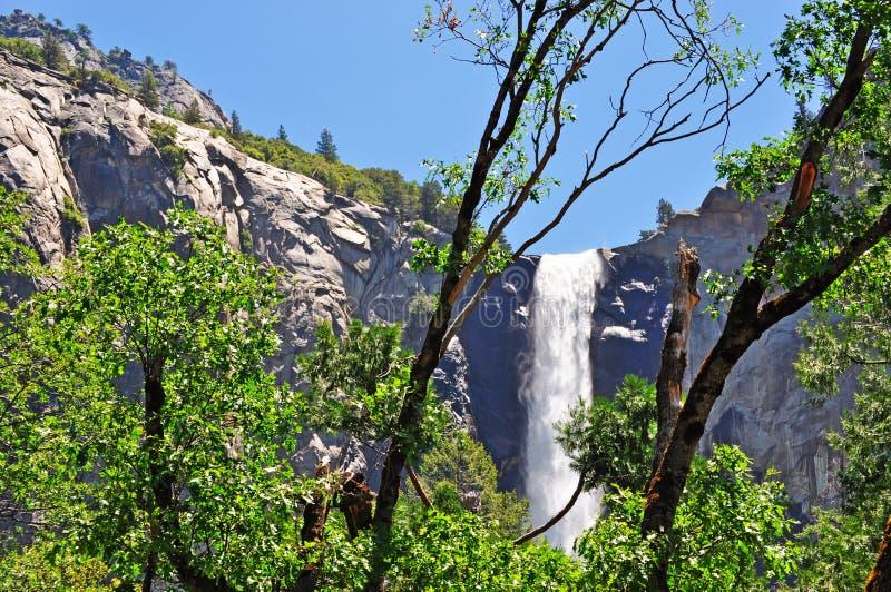 California, United States of America, Usa, Yosemite Park, nature reserve, green, landscape, mountain, waterfall, fall. Yosemite Falls seen trough giant sequoia stock images