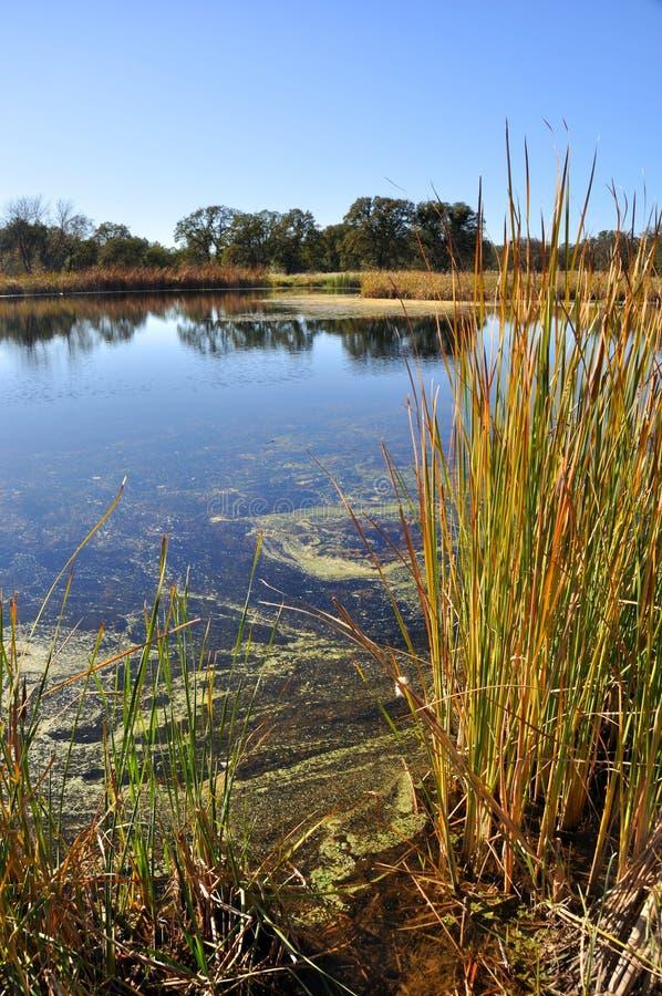 Free California Wetlands Stock Image - 11963831