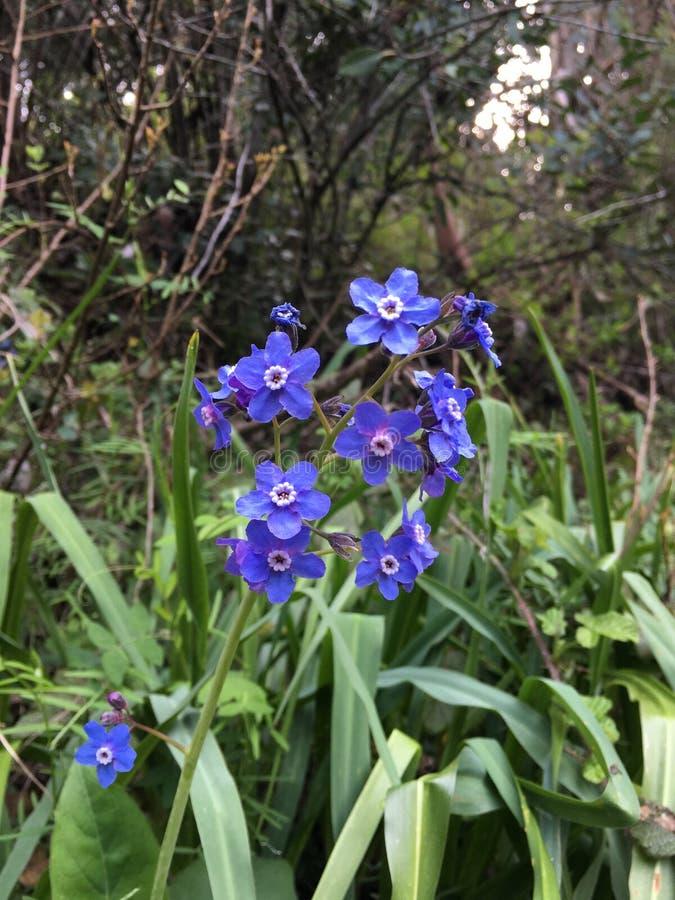 California wildflowers stock photo