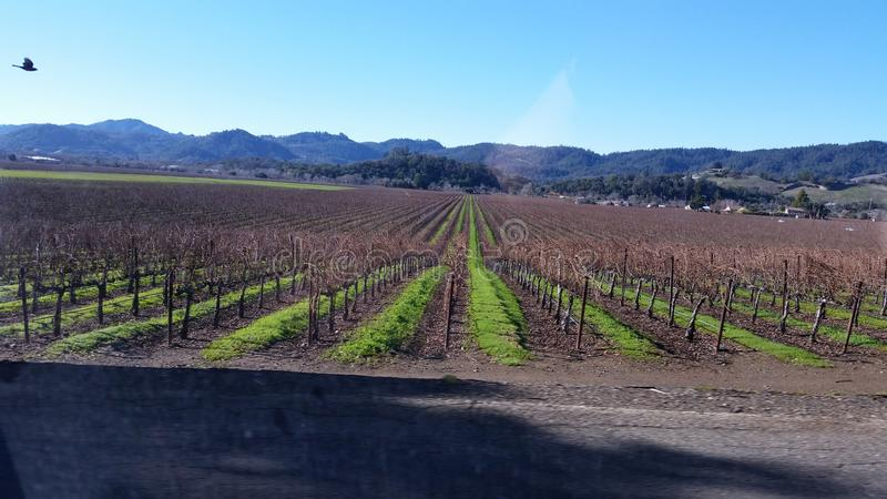California wine country stock image