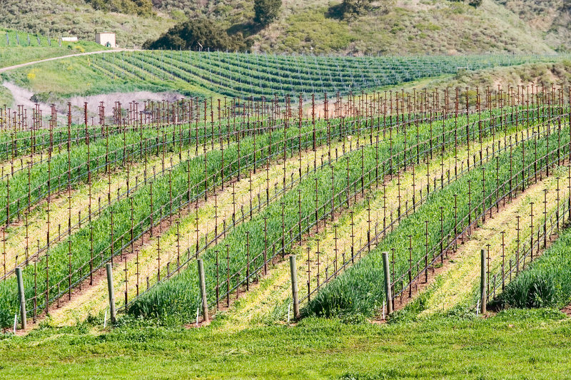 California winery stock images