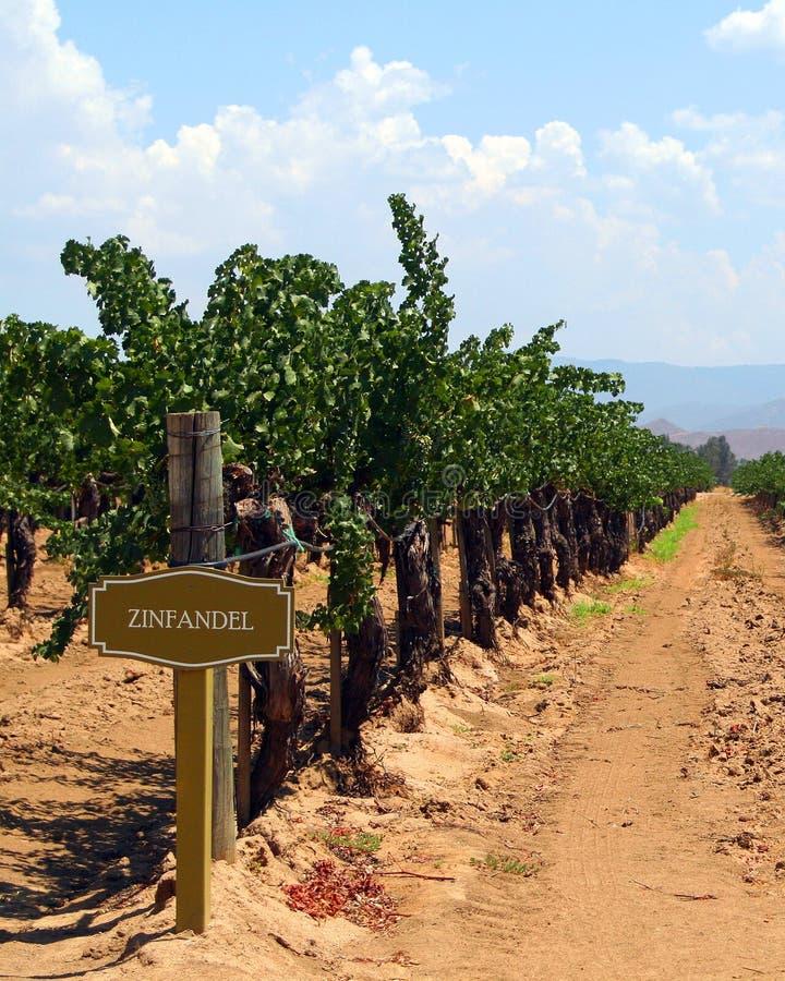 California winery royalty free stock photo