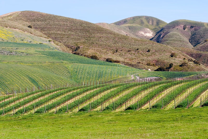 Download California Winery 2 stock image. Image of fertile, till - 1354911