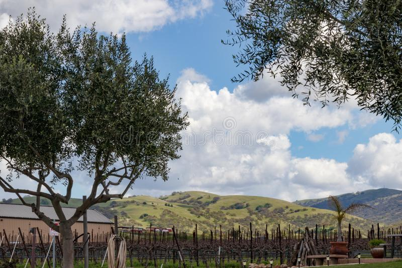 California winery near Livermore stock images