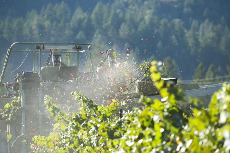 california winogrona zbierający wino obrazy stock