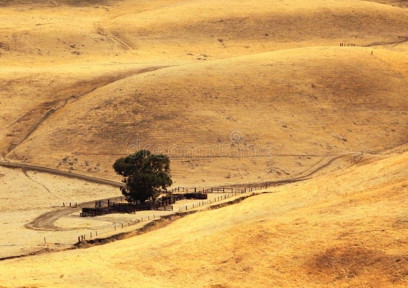 california wzgórzy dróg wiejski miękki skręcanie zdjęcie royalty free