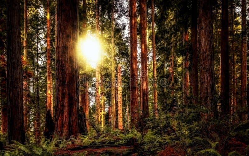 Californische sequoia Forest Landscape stock afbeelding