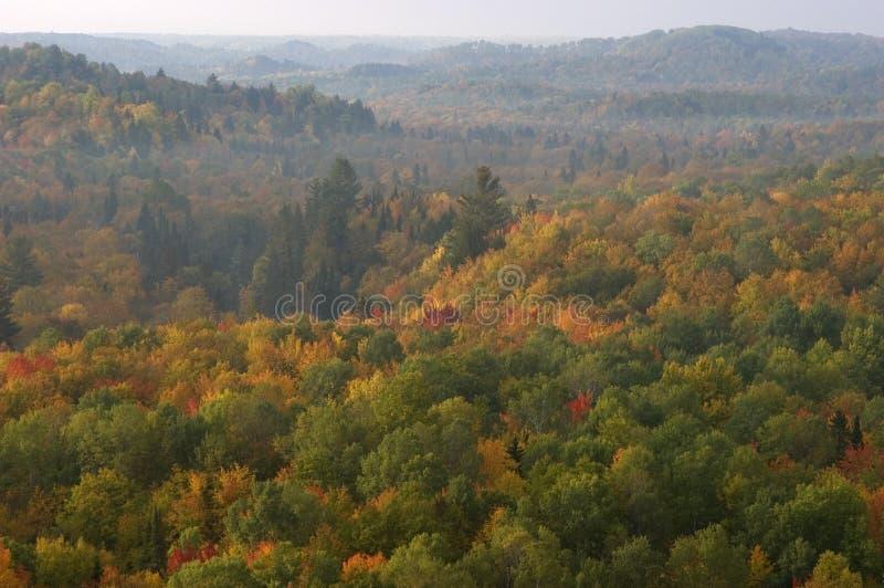 Calina de la mañana sobre el bosque de los colores de la caída fotos de archivo