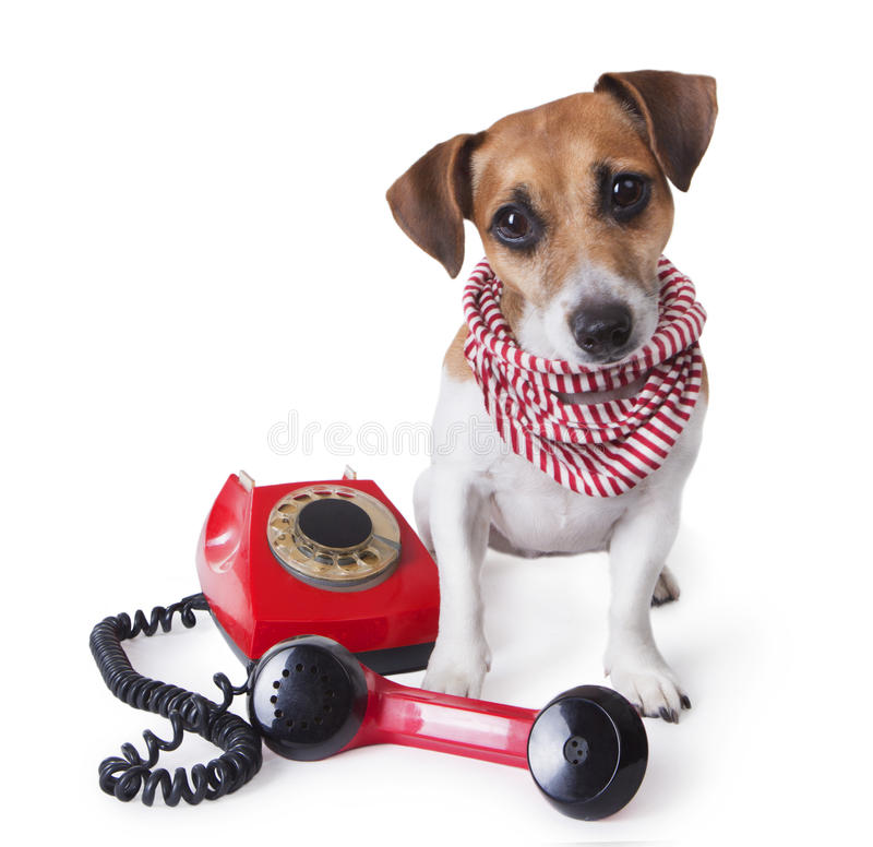 Call Center Dog Phone Royalty Free Stock Images