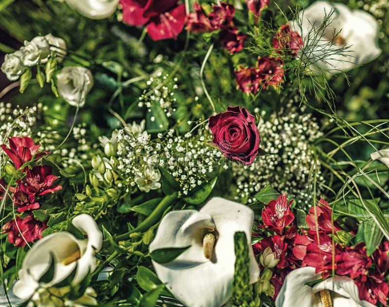 Calla красной розы и белых стоковое изображение rf